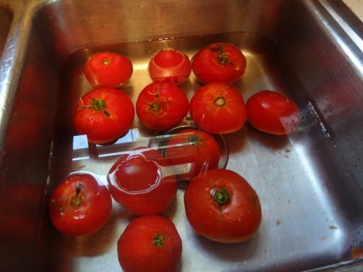 Blanching tomatoes.